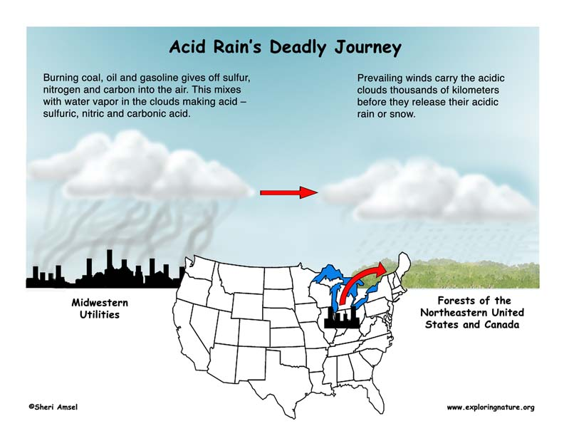 Acid Rain Illustrated and Explained