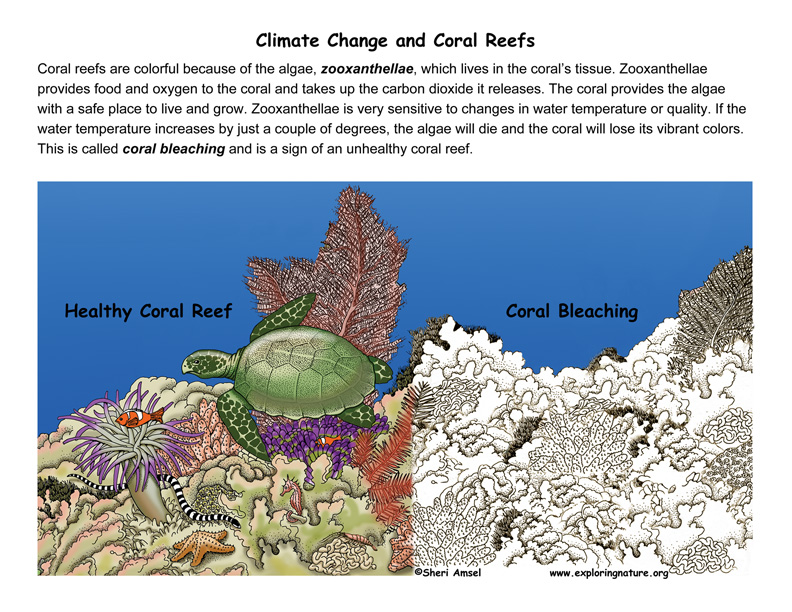 Protecting Coral Reefs - Design a Solution