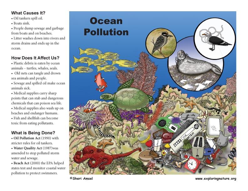 Ocean Pollution Questions From School Kids