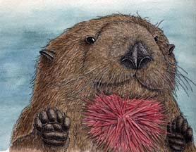 Keystone Species - Sea Otter