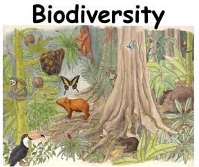 biodiversity and biodiversity indices essay