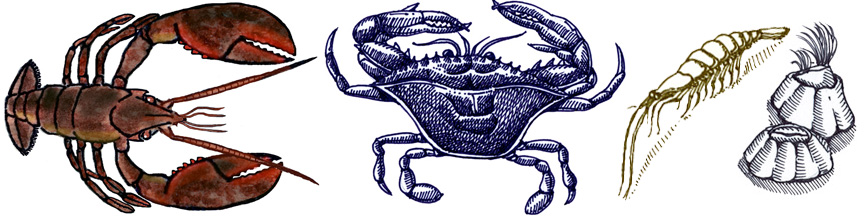 Crabs, Lobsters & Barnacles