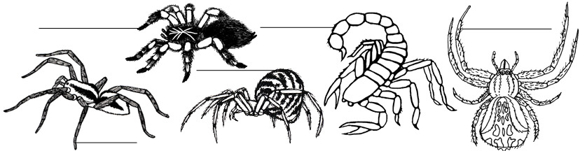 Spiders & Scorpions Labeling Pages