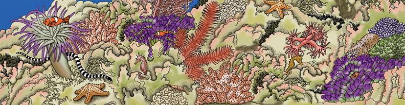 Sea Anemones & Coral