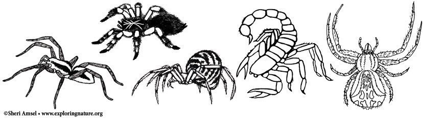 Invertebrate Coloring Pages
