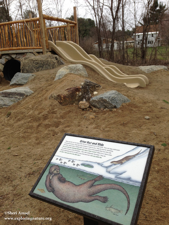 Otter interpretive sign