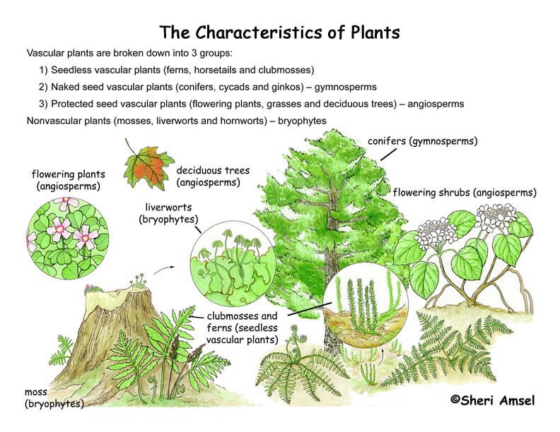 Characteristics of Plants Illustrated and Named