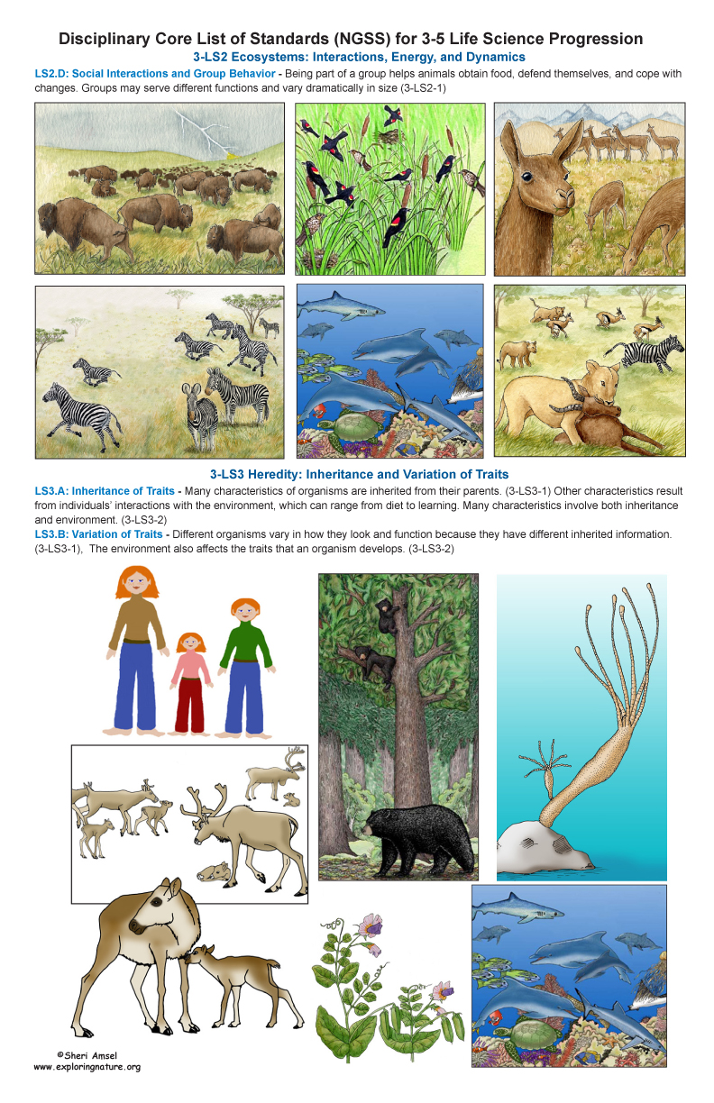 Life Science Standards for Grade 3-4 on Large Illustrated Posters