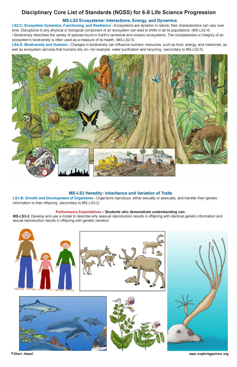 Life Science Standards for Grade 6-8 on Large Illustrated Posters