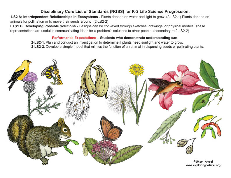Disciplinary Core List of Standards (NGSS) for K-2 Life Science with Illustrated Posters