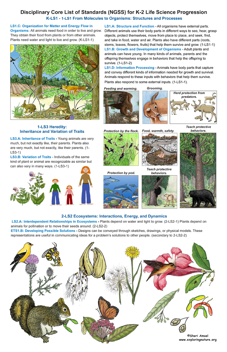 Life Science Standards for Grade K-2 on Large Illustrated Posters