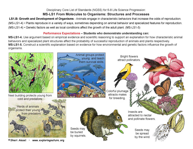 Disciplinary Core List of Standards (NGSS) for 6-8 Life Science with Illustrated Posters