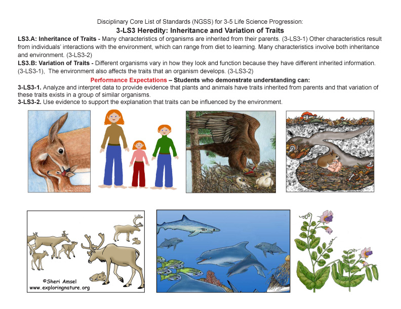 Disciplinary Core List of Standards (NGSS) for 3-5 Life Science with Illustrated Posters