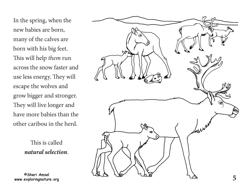 Adaptation Illustrated for K-5, caribou adaptation