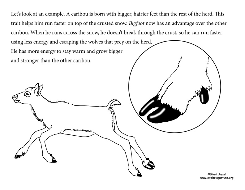 Adaptation Illustrated