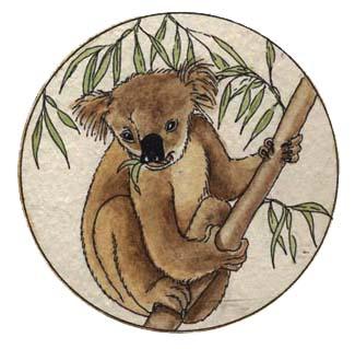 Adaptations of the Koala