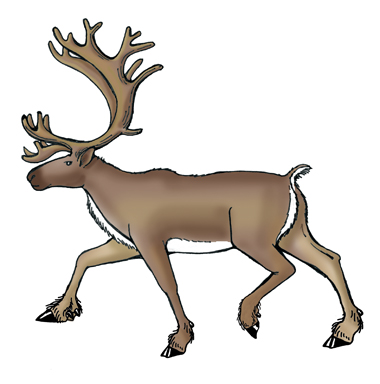 Adaptations of the Caribou