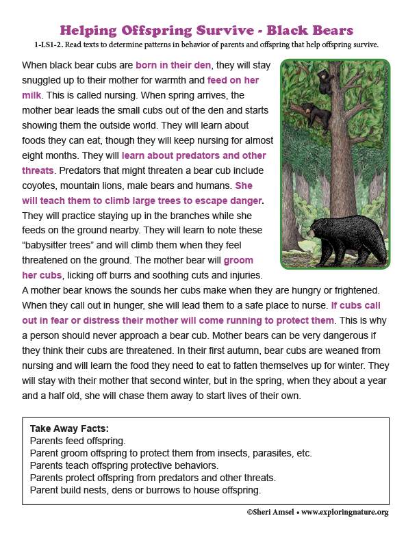 Helping Offspring Survive - Read About Black Bears