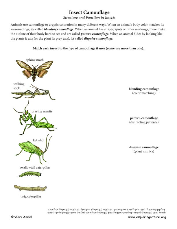 Insect Camouflage Matching - Structure u0026 Function