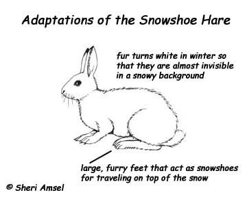 Rabbit fancy dress rabbit free engine image for user for Snowshoe hare coloring page