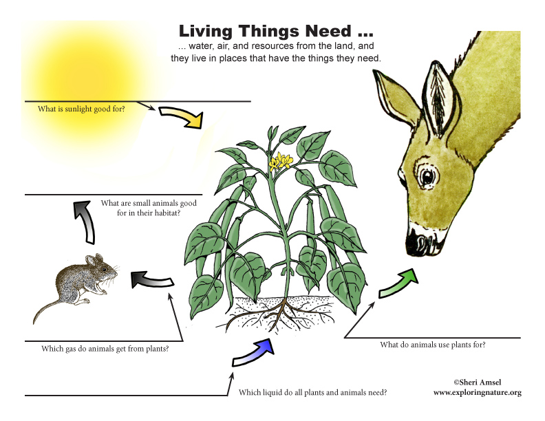What Do All Living Things Need? Labeling