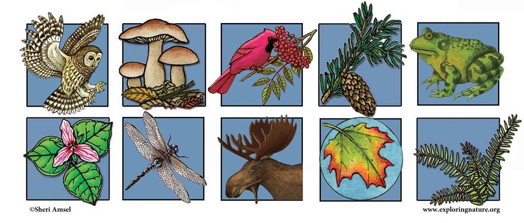 Adirondack Illustrator Logo