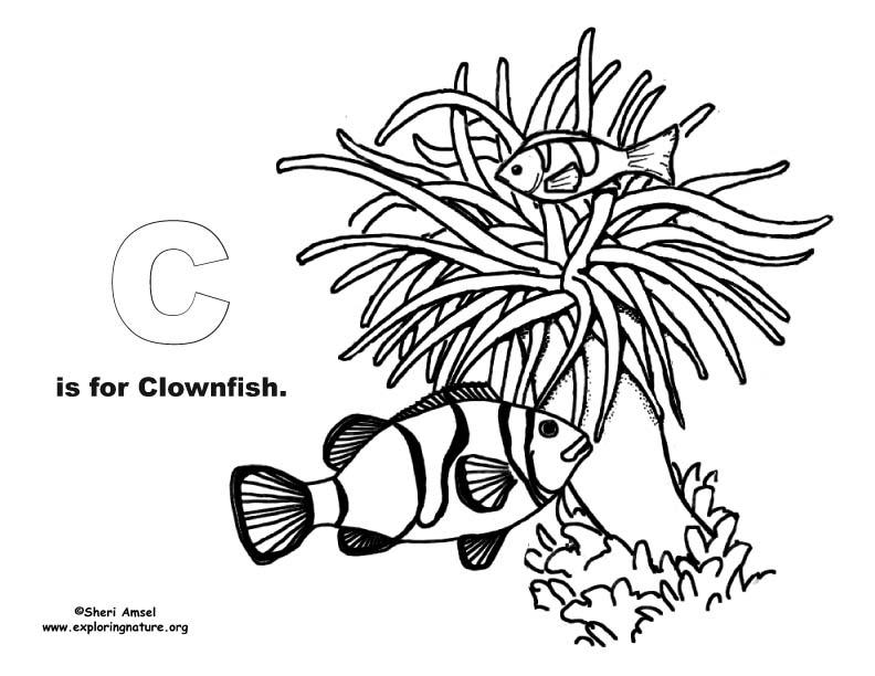 Ocean Alphabet Coloring Book