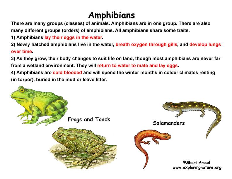 Names Of Amphibians