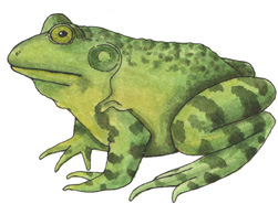 Amphibians – Multiple Choice Test