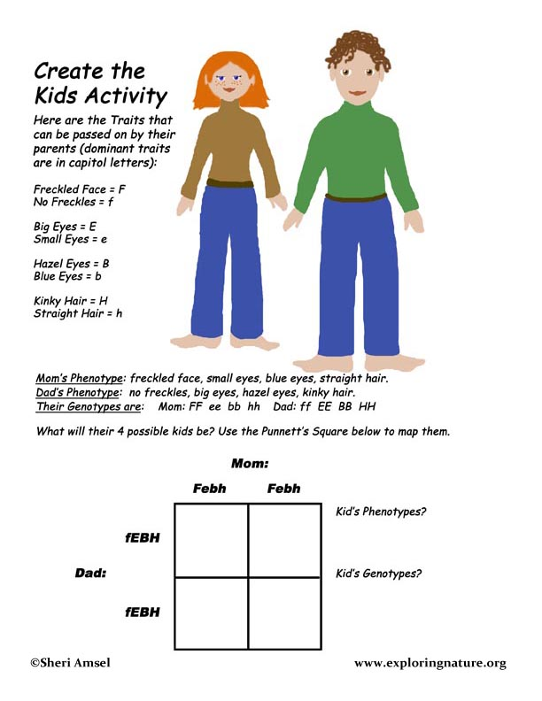 Genetics Activity - Create The Kids