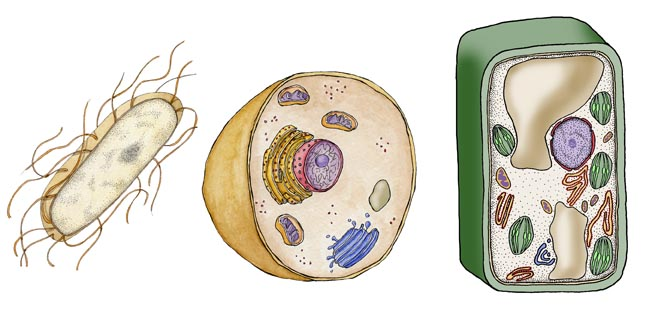 Cell Structure and Function and Tissues