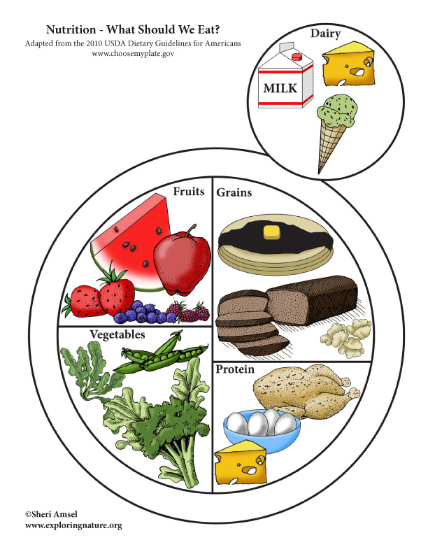 MyPlate Nutrition food diagram color