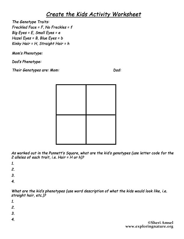 Activity Create The Kids – Punnet Square Worksheet