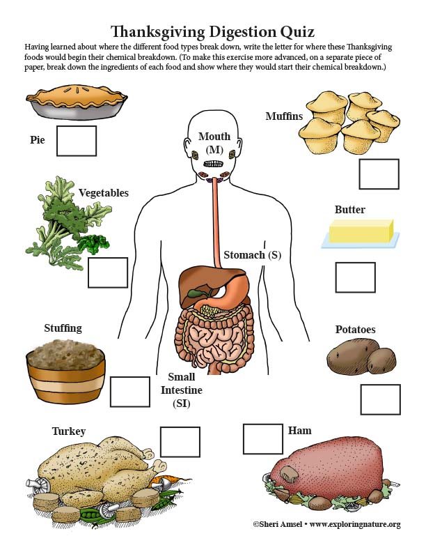 Thanksgiving Food Digestion Quiz