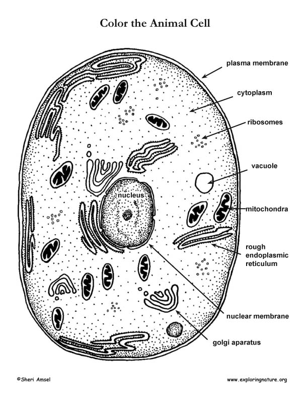 animal cell coloring page