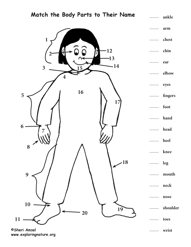 Body Parts Matching Activity (K-3)