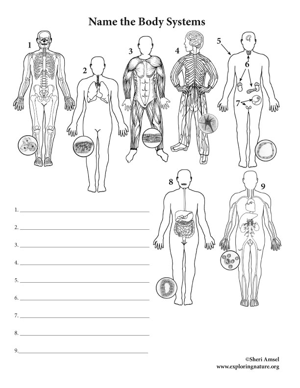 Body Systems Labeling
