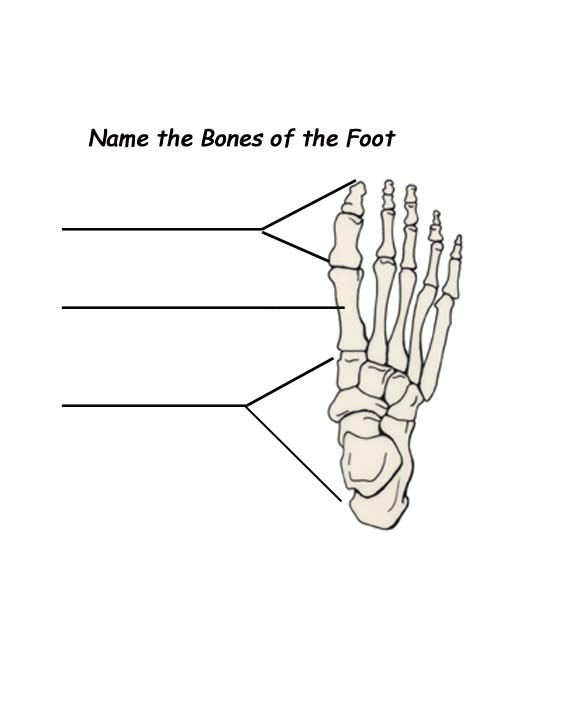 foot anatomy coloring pages - photo#25