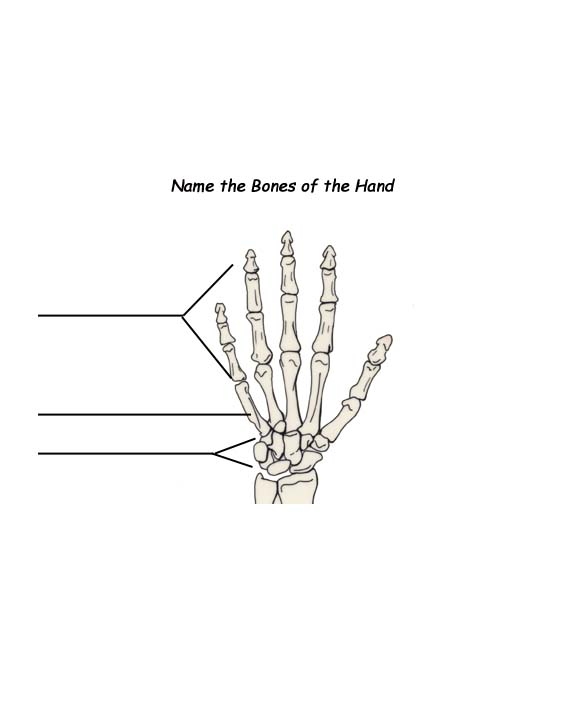 Labeled Hand Bones Handout graphic