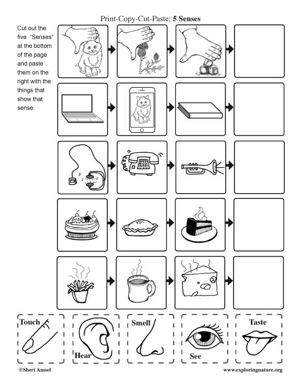 Five Senses: Cut and Paste