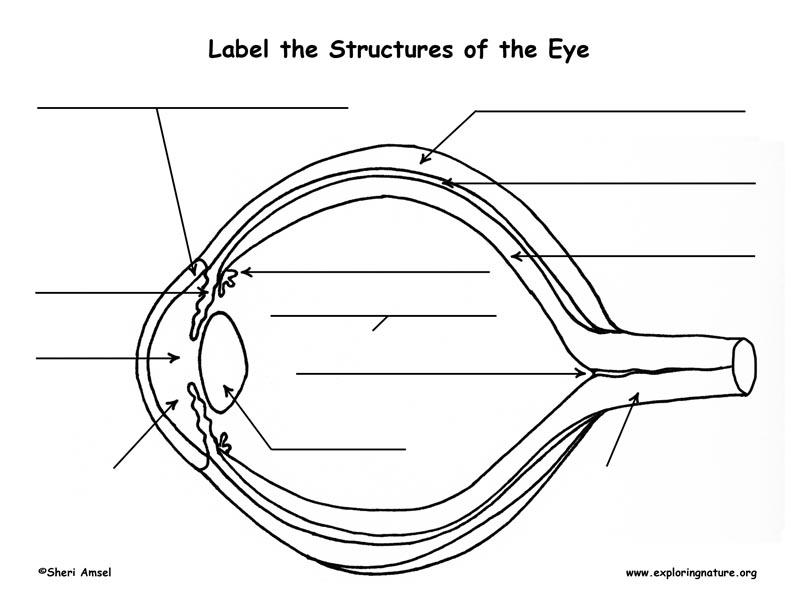 Eye Anatomy Labeling