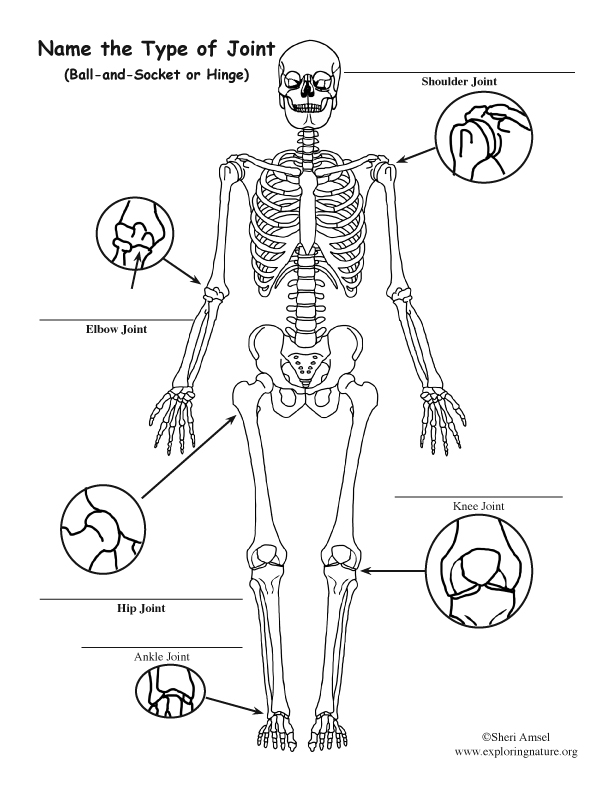 Joints of the Body Labeling Page