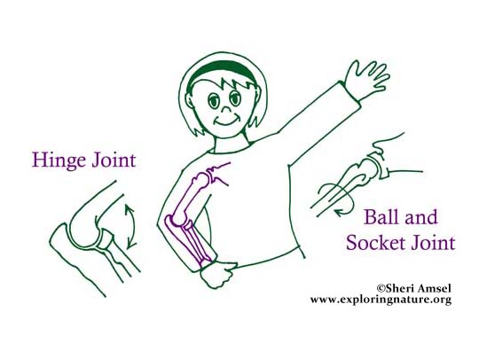 Joints Basic Understanding