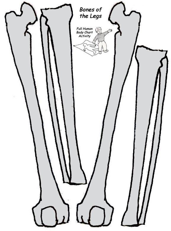 Make A Model Of The Human Skeleton Exploring Nature
