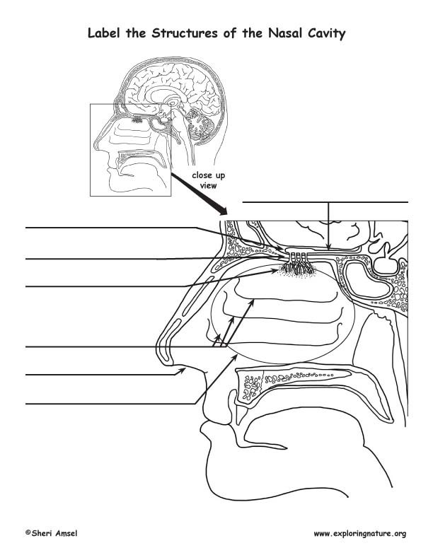 Smell Olfactory Organs Labeling Page