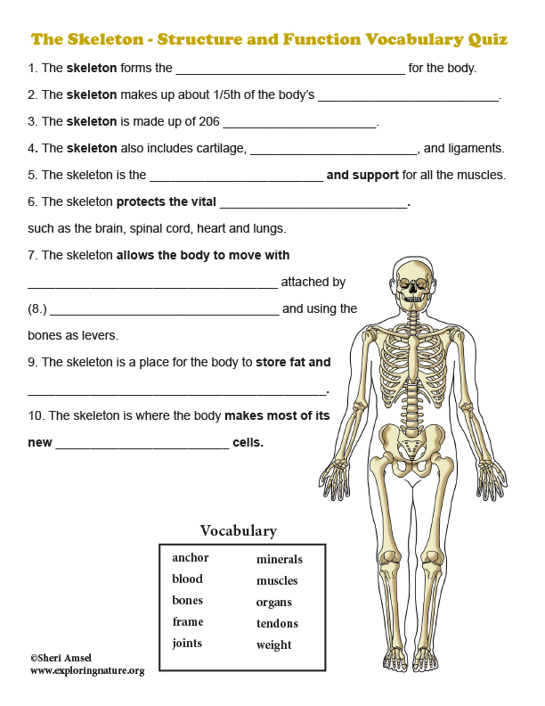Skeleton - Structure and Function Vocabulary Quiz