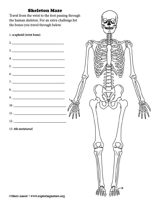 Skeletal System Maze