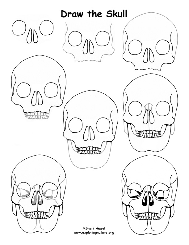 Skull Drawing Lesson
