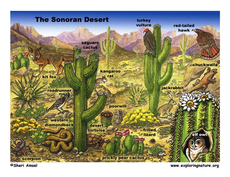 Sonoran Desert Scene with Species Named