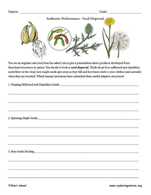 Seed Dispersal Adaptation - Authentic Performance